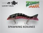 spawning kokanee